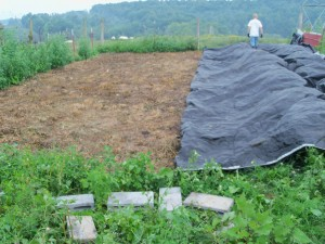 Uncovering garden