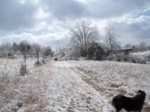 Ice Storm 4 014