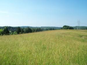 hay making 6-5-15 001