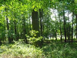 A South Wood Walk 009
