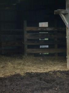Farm November 017