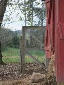 Farm November 019