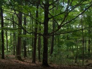 A South Wood Walk 018